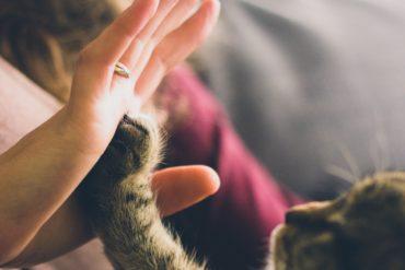 dresser un chat dans un environnement rassurant
