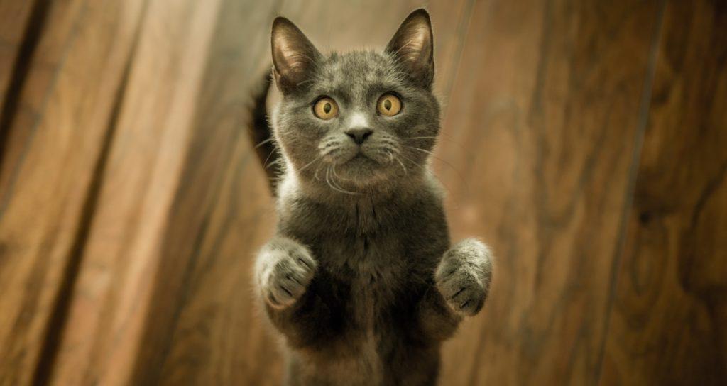 dresser un chat avec des récompenses