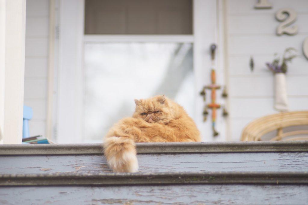 chat obese, conseils pour éviter le surpoids