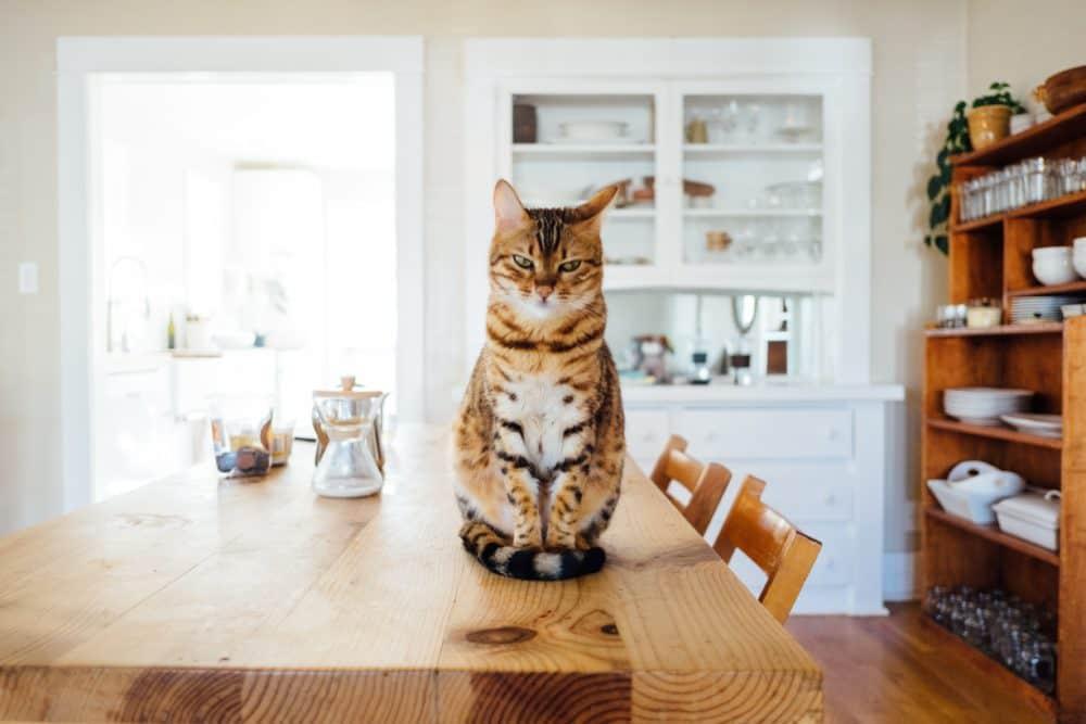Malpropreté du chat, comment l'éviter