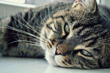 prendre soin de son chat agé