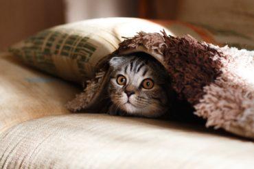 Stimuler votre chat