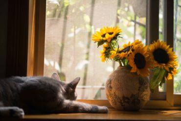 empecher mon chat de manger mes plantes