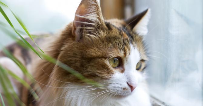 trouver une assurance pour son chat