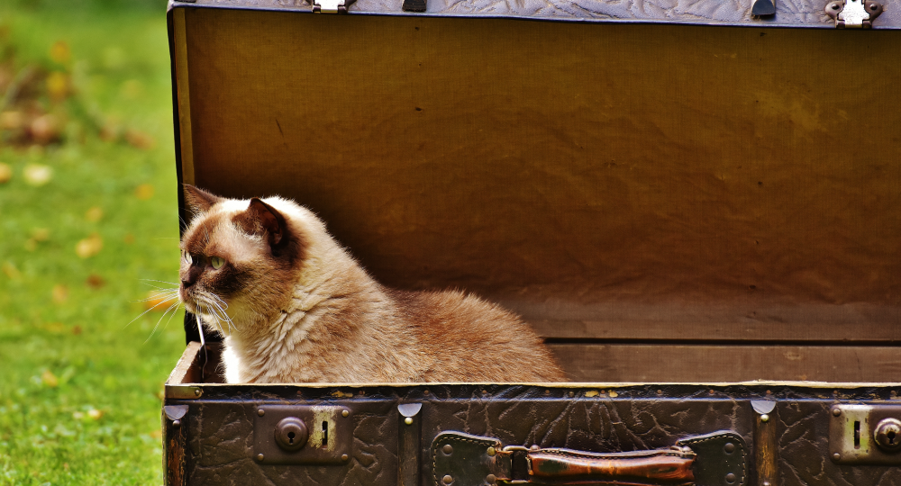 Astuces pour voyager sereinement avec un chat