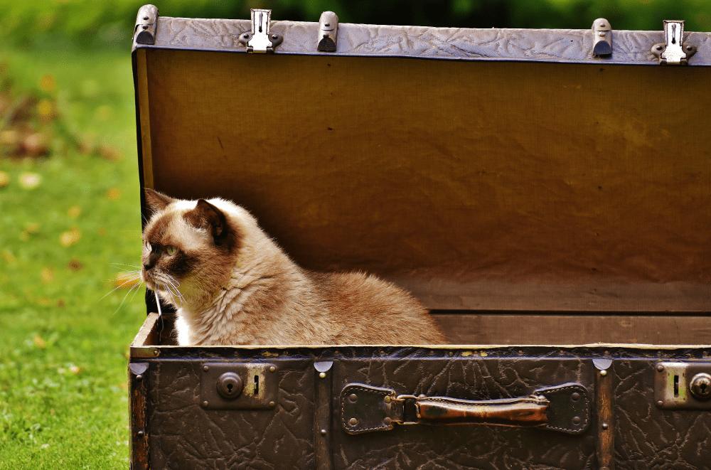 Quelques astuces pour voyager avec votre chat