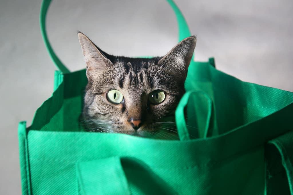 sac de transport pour chat