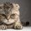 Comment reconnaître un chat malheureux ?