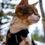 Harnais pour chat : Comparatif et guide d'achat