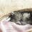Arrivée d'un chaton: conseils et astuces pour tout préparer!