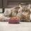 Les meilleures croquettes sur mesure à donner à son chat