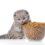 Alimentation pour chat : quelles sont les bonnes pratiques ?
